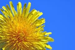 De lente sun6 Stock Afbeeldingen