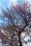 De lente in Toscanië Stock Afbeeldingen