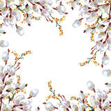 De lente, tot bloei komende pussy-wilg, waterverf Stock Afbeeldingen