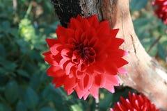 De lente in de tuin Stock Foto