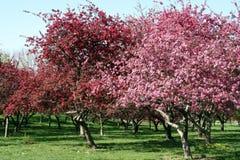 De lente in Tuin 12 Stock Afbeelding
