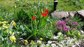 De lente in tuin royalty-vrije stock foto