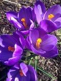 De lente in de Tuin royalty-vrije stock foto