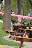 De lente Tulip Flower stock afbeeldingen