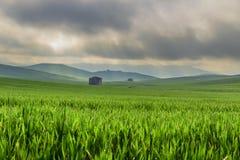 de lente Tussen Apulia en Basilicata Heuvelig landschap met onrijp graangebied, overheerst door wolken Italië royalty-vrije stock afbeelding