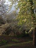 De lente in Ukrain Het de tijd van ` s te bloeien stock afbeelding