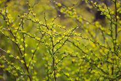 De lente vage bokeh achtergrond Stock Foto's