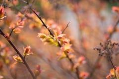 De lente vage bokeh achtergrond Stock Afbeeldingen