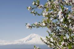 De lente in vallei Ararat Stock Afbeeldingen