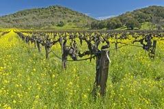 De lente in Vallei Napa Stock Foto's