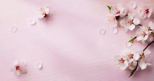 De lente van de kunst bloeit achtergrond Royalty-vrije Stock Foto's