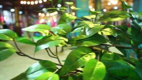 De lente van de tuinplantkunde stock videobeelden