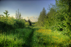 De lente van Groot-Brittannië van het platteland Stock Fotografie