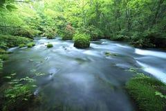 De lente van het water in bos Stock Afbeeldingen