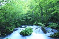De lente van het water in bos Royalty-vrije Stock Foto's