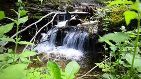 De lente van het water in bos stock videobeelden