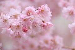 De lente van Japan Royalty-vrije Stock Afbeeldingen