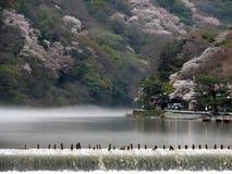 De Lente van Kyoto Stock Foto's