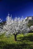 De lente van Majorca Royalty-vrije Stock Foto's