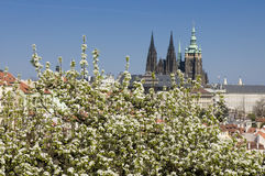 De lente van Praag stock afbeelding
