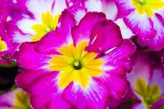 De lente, vers geplante bloemen bij achtertuin stock afbeelding