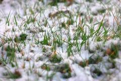 De lente vers groen die gras met sneeuw wordt behandeld Vorst in maart of april Ondiepe DOF, selectieve nadruk, mooie bokeh kant Royalty-vrije Stock Afbeelding