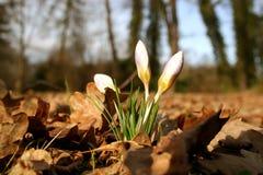 De lente versus de herfst Stock Foto's