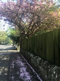 De lente vibes Royalty-vrije Stock Fotografie