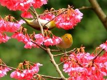 De lente, vogels en bloemen, en donkergroene zilveren ogenbloesems royalty-vrije stock afbeelding