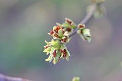 De lente in volledige rechten Stock Afbeeldingen