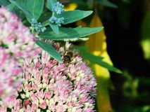 De lente is wedergeboorte met bijen stock foto