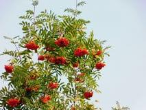 De lente is wedergeboorte met rode bloemen stock foto's