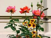 De lente is wedergeboorte met rode en gele bloemen stock fotografie