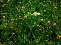 De lente is wedergeboorte met roze bloem stock afbeeldingen