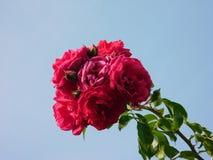 De lente is wedergeboorte met toenam royalty-vrije stock afbeeldingen
