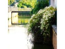 De lente is wedergeboorte op de rivier royalty-vrije stock foto