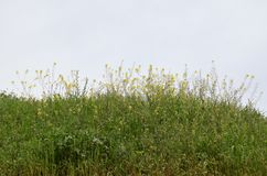 De lente wilde bloemen Stock Afbeeldingen