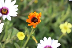 De lente wilde bloemen Stock Foto
