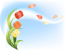 De lente, wind, tulpen Stock Foto