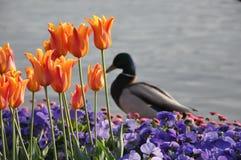 De lente in Zürich Royalty-vrije Stock Foto's