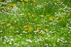 De lente of de Zomerbloemen en Gras royalty-vrije stock foto