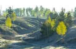 De lente, zonsopgang over het ravijn, bomen met transparante jonge bladeren in de ochtend blauwe nevel royalty-vrije stock afbeeldingen