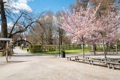De lente in Zweden Royalty-vrije Stock Foto