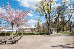 De lente in Zweden Stock Afbeelding