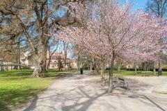 De lente in Zweden Royalty-vrije Stock Afbeelding