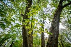 De lenteaard in bos stock foto's