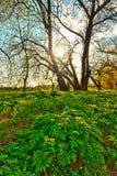 De lenteachtergrond stock foto's