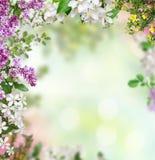 De lenteachtergrond Royalty-vrije Stock Afbeeldingen
