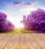 De lenteachtergrond Royalty-vrije Stock Foto's
