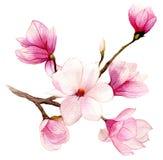 De lenteachtergrond met de bloem van de waterverfmagnolia Stock Fotografie